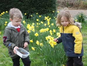 school children amongst daffodils