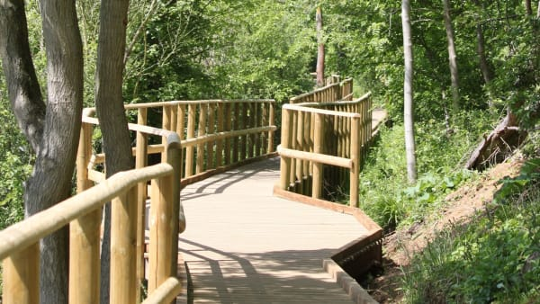 view of the wooden boardwalks in bluebell woods nene park