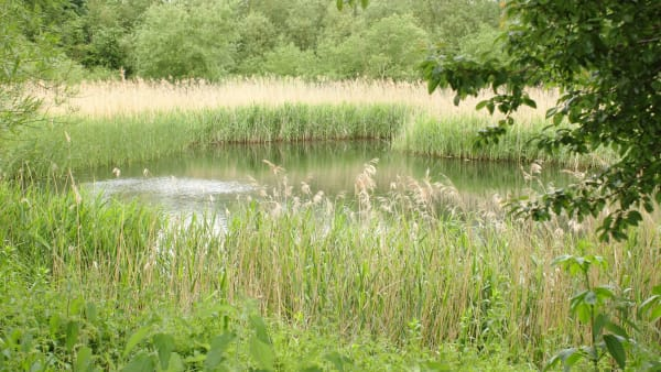 peaceful pond view at woodston reach