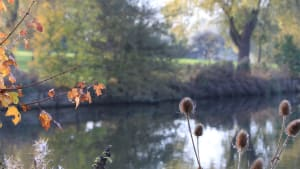 autumn setting across the lake at nene park