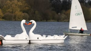 two swan pedalos and a sailing boat on a lake