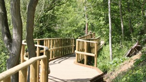 Bluebell Wood Boardwalk